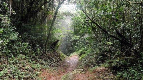 Gratis stockfoto met bomen, Bos, natuur