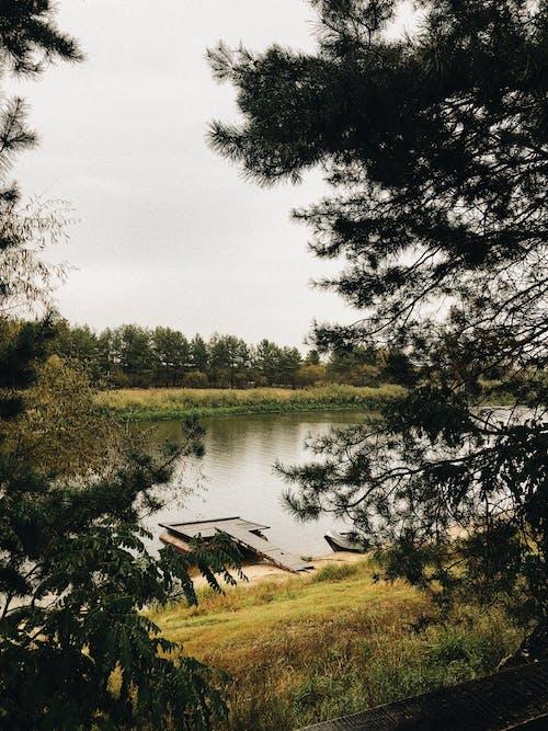 Immagine gratuita di erba, esterno, fotografia della natura