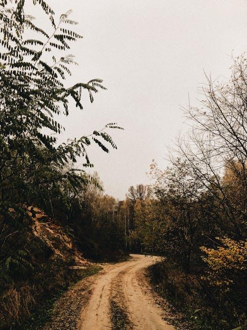Immagine gratuita di alberi, esterno, fotografia della natura