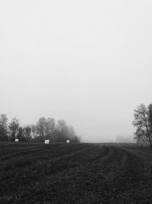 Immagine gratuita di bianco e nero, campo d'erba, esterno