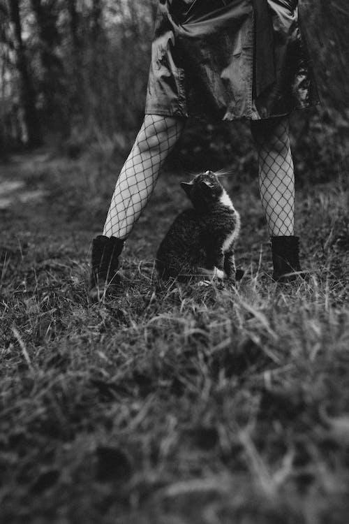 Immagine gratuita di animale, animale domestico, erba