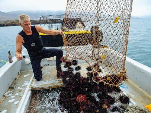 A Man Catching Sea Urchins