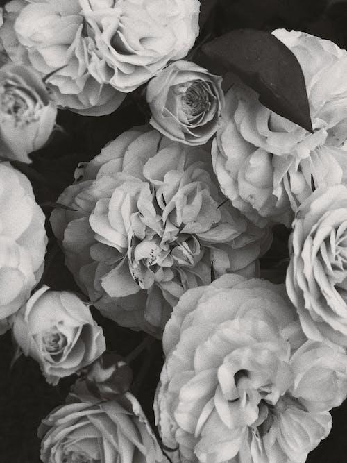 Immagine gratuita di amore, botanico, bouquet