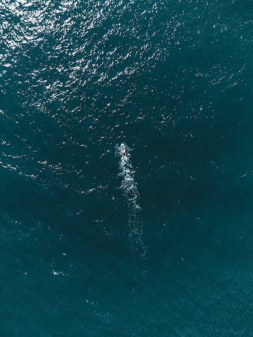 balık, balıklar, deniz içeren Ücretsiz stok fotoğraf
