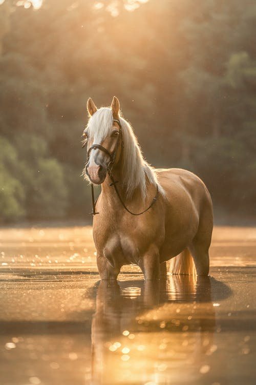 Brown Horse Running on Water