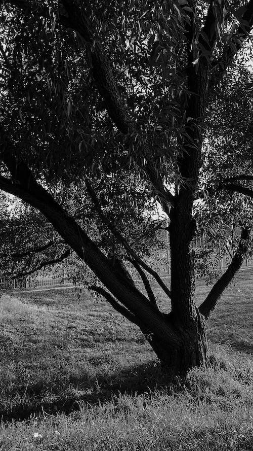 Ingyenes stockfotó ág, árnyék, esés témában