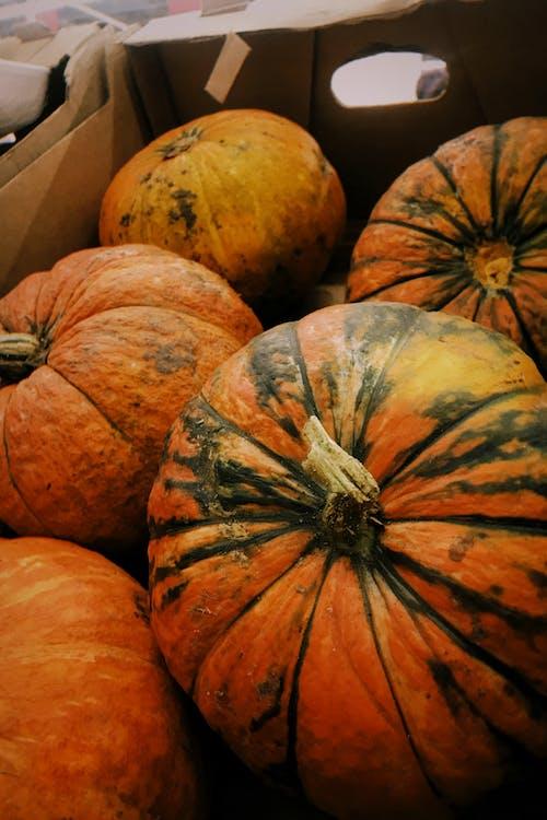 A Close-Up Shot of Pumpkins