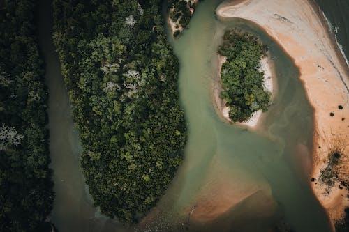 Fotos de stock gratuitas de agricultura, agua, árbol