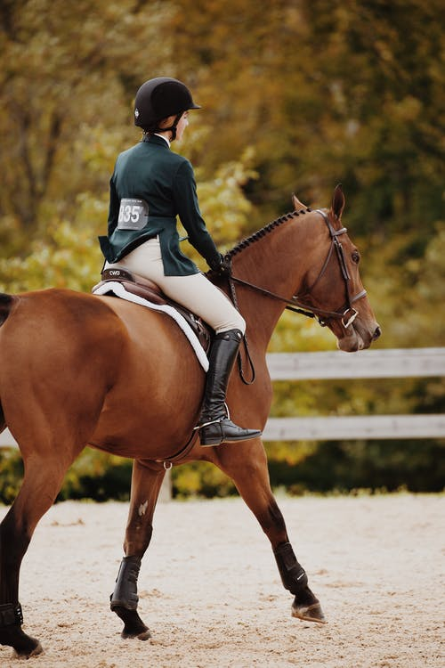 Depth of Field Photography of Woman Riding Brown Horse