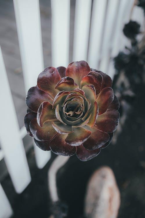 Free stock photo of beautiful, blooming, cactus