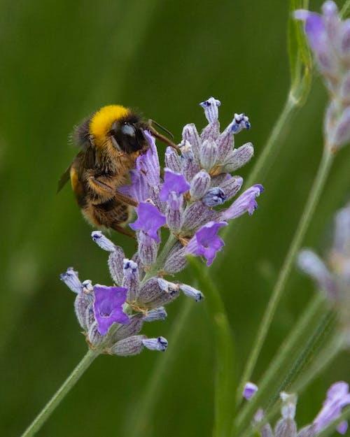 Základová fotografie zdarma na téma abeja, amarillo, černoch