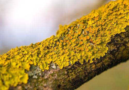 #lichen, 大自然, 天性, 宏觀 的 免费素材照片