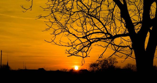 Silhouette Photo of Bare Tree