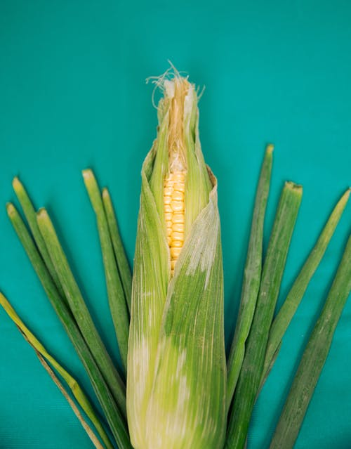 Green and Yellow Corn Plant