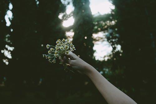 Персона держа желтый цветок лепестка во время дневного времени