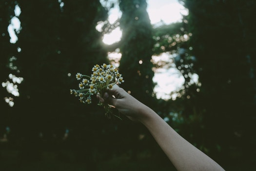 Person Holding Yellow Petal Flower during Daytime