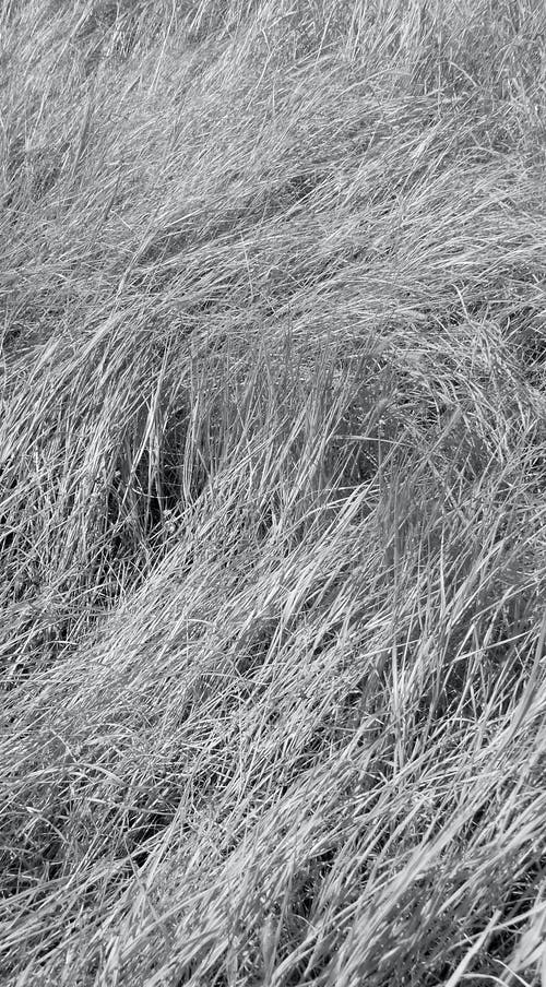 Free stock photo of black and white, dry land, herbs
