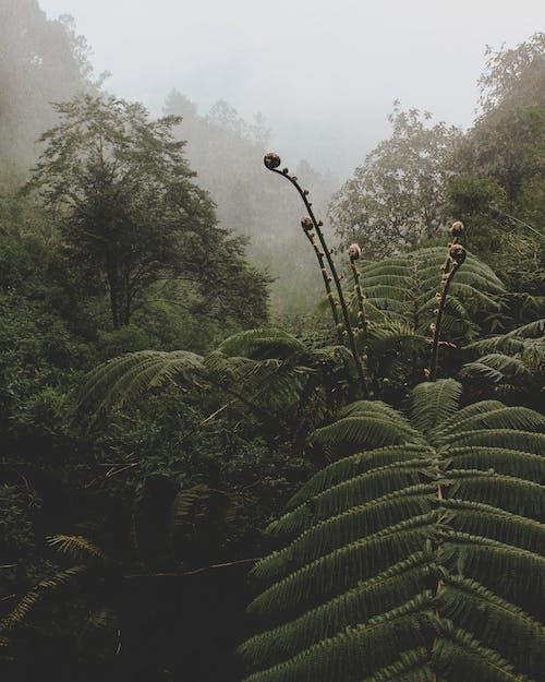 Gratis arkivbilde med blader, bregne, daggry, grønn