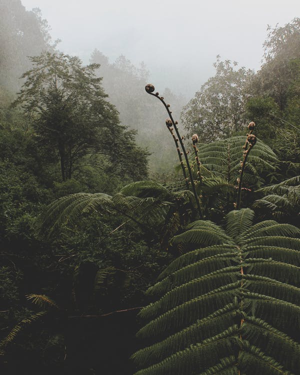 alba, arbres, boira