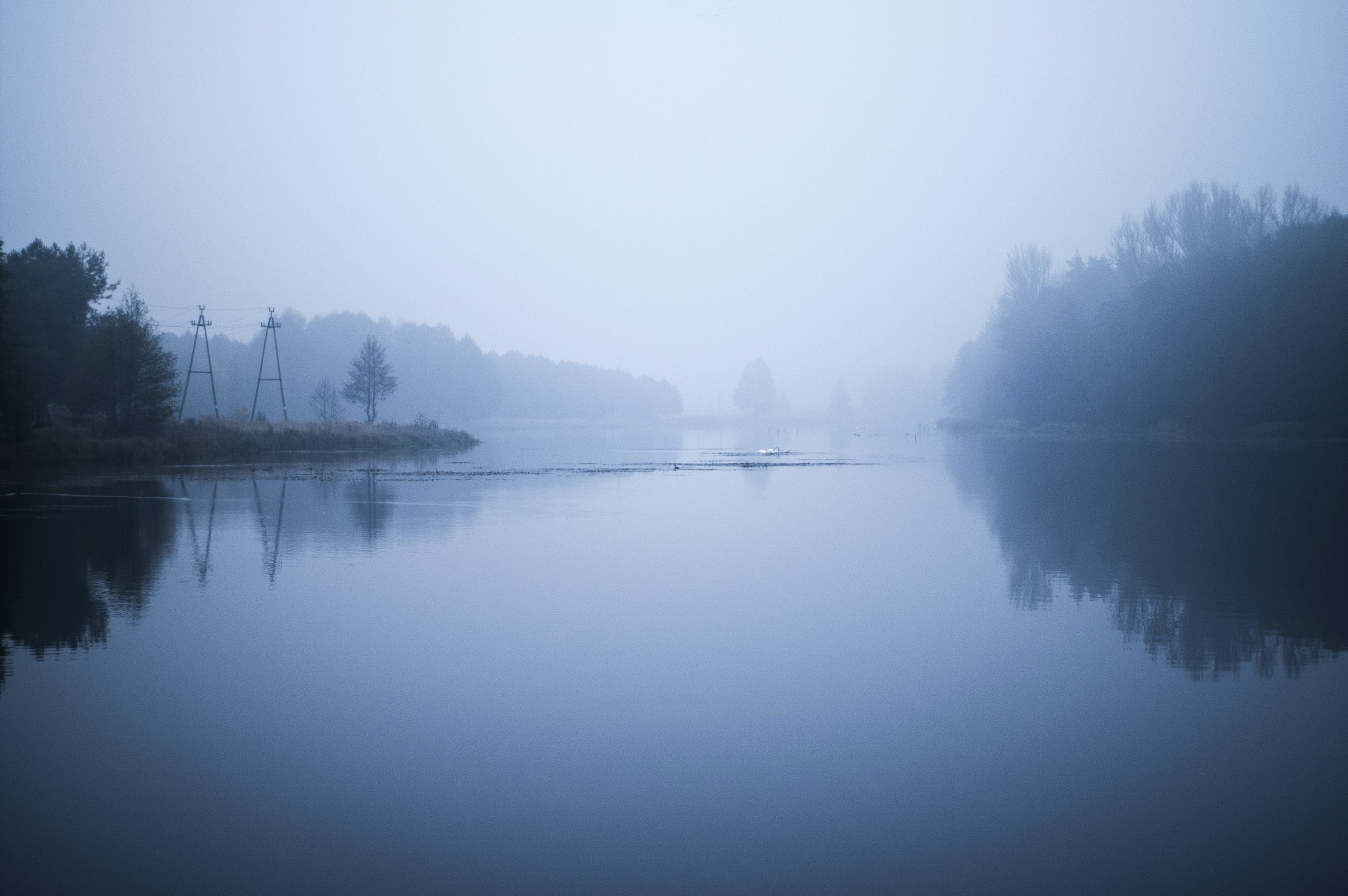 Free stock photo of water, blue, forest, fog