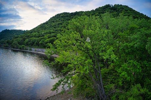 ジャングル, トロピカル, パークの無料の写真素材