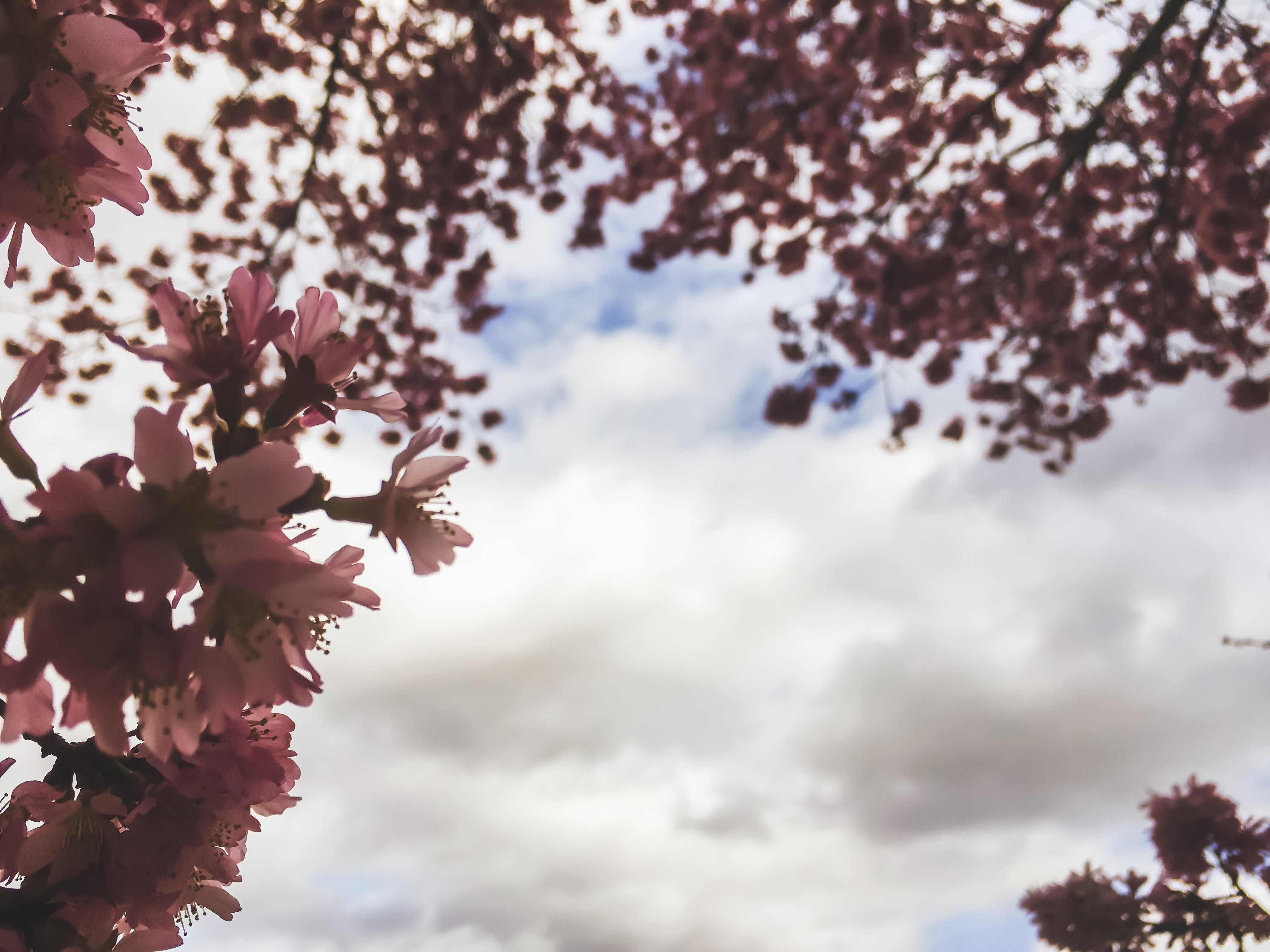 Free stock photo of eco, flora, pink, spring