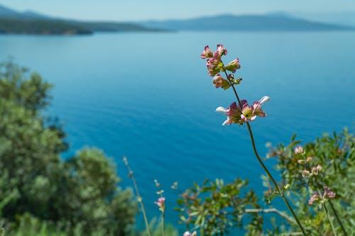คลังภาพถ่ายฟรี ของ กลางวัน, กลางแจ้ง, ชายหาด, ดอกไม้