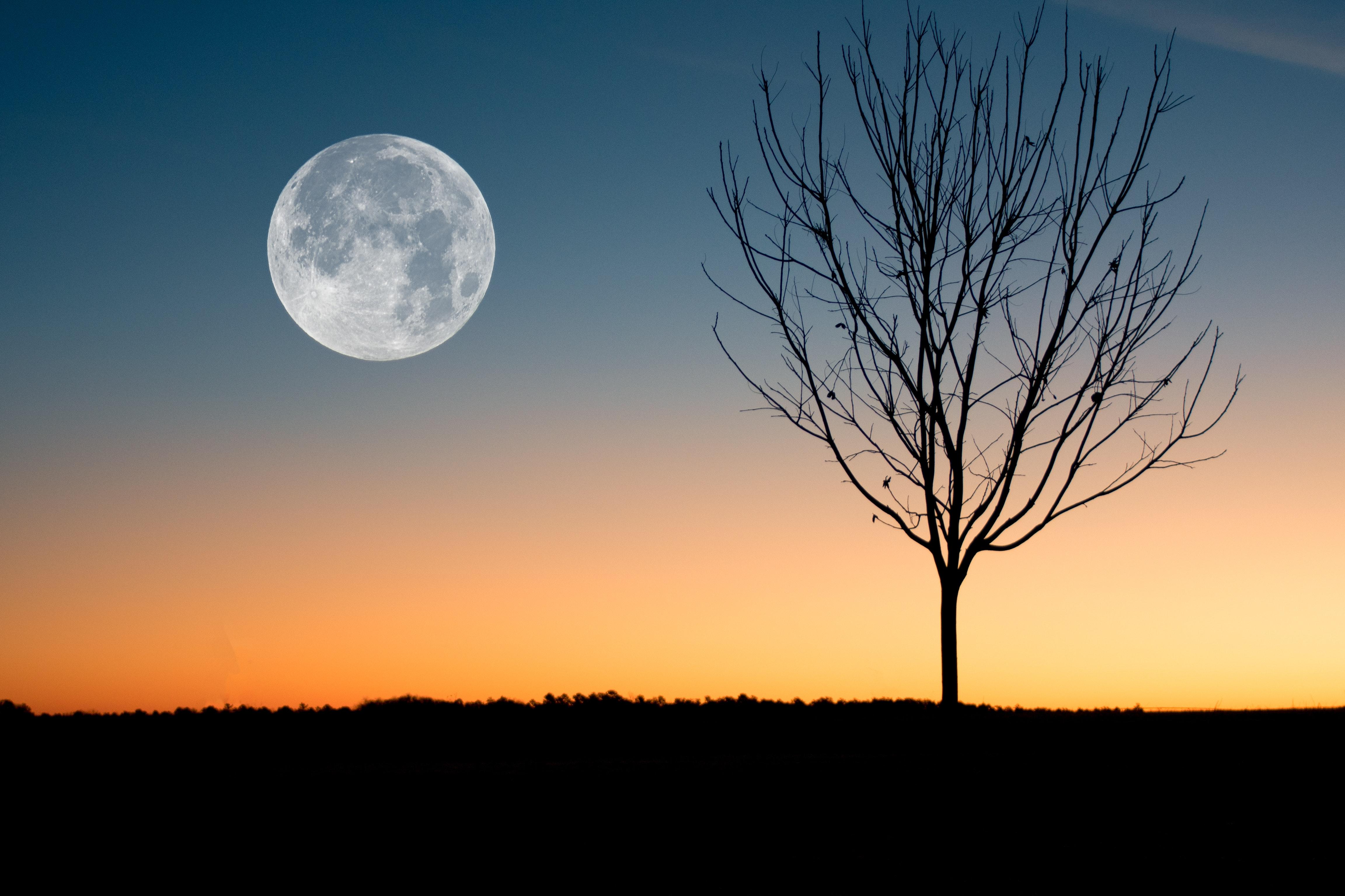 250 amazing full moon photos pexels free stock photos. Black Bedroom Furniture Sets. Home Design Ideas