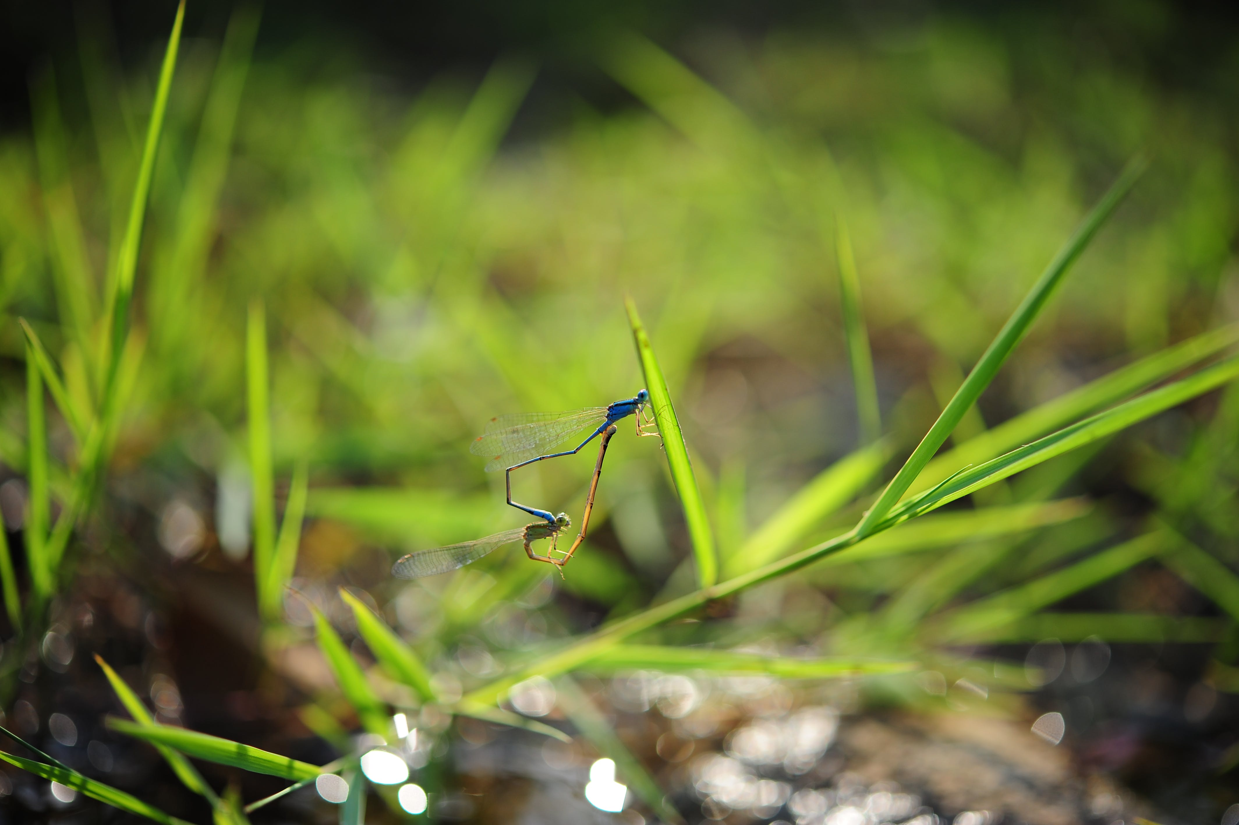 Blue Insect on Green Plant on Tilt Shift Lens Photography