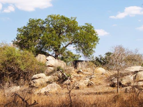Green Leaf Tree Near Rocks