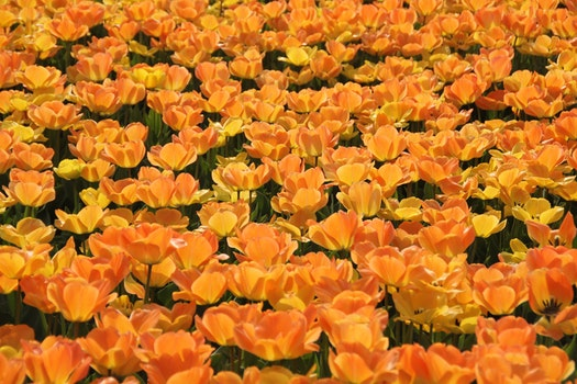 Orange and Yellow Petaled Flowers