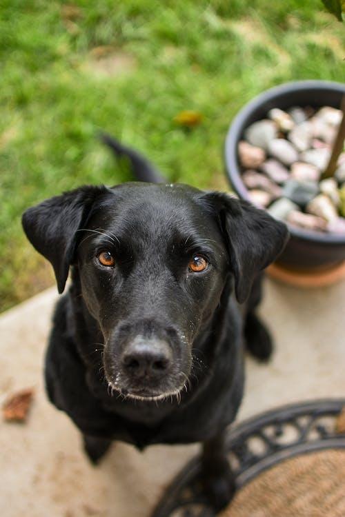 Fotos de stock gratuitas de animal, canino, fotografía de perro