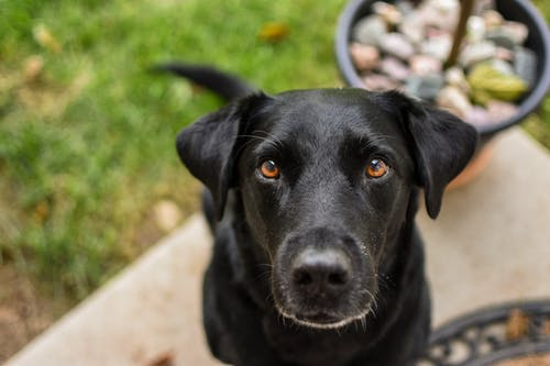 Fotos de stock gratuitas de animal, canino, de cerca