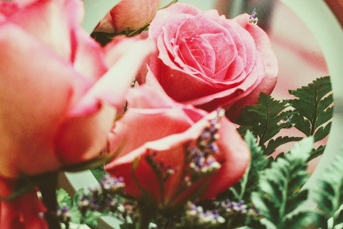 kasvikunta, kukat, kukinta