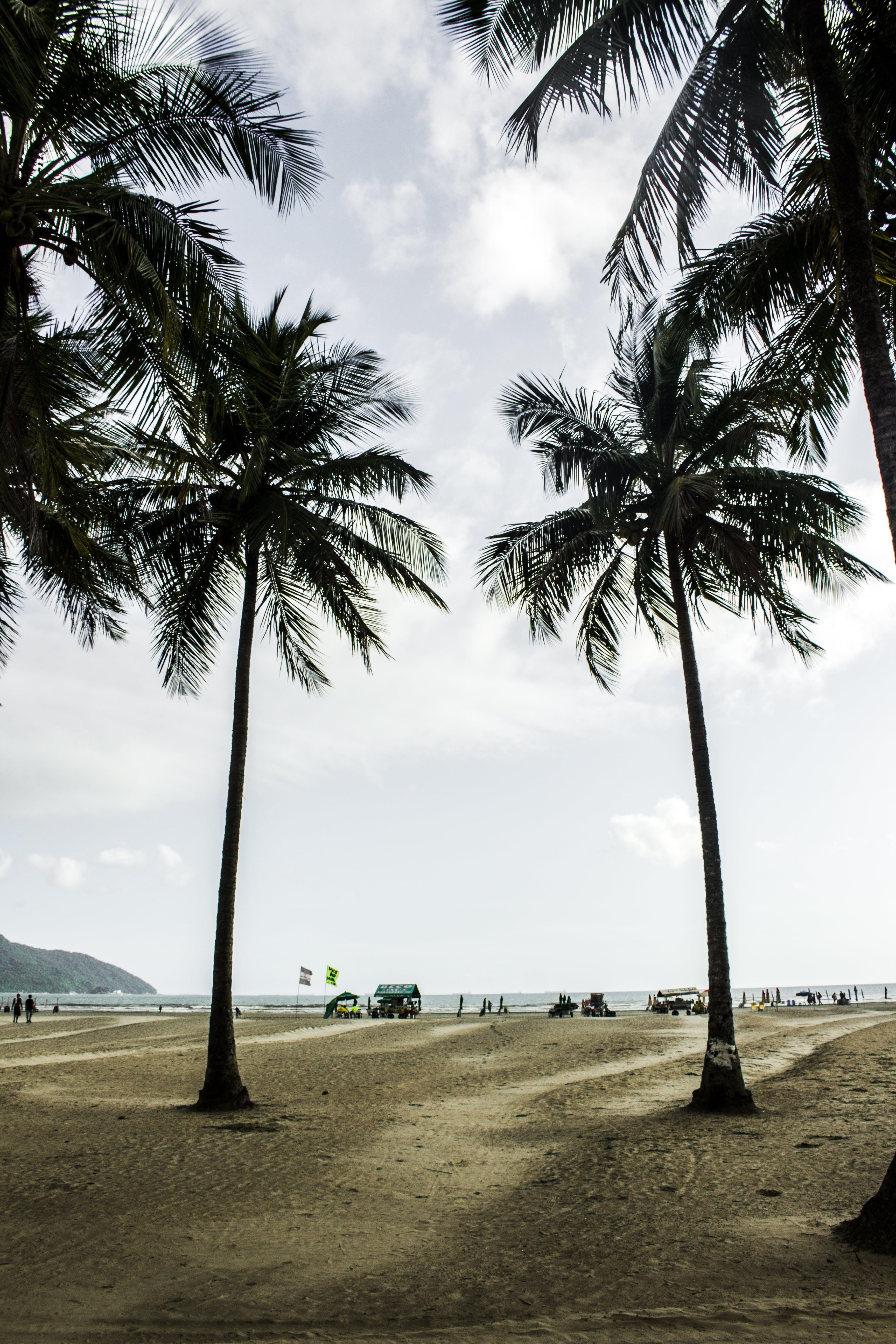 Palm Trees Near Shore