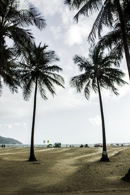 Ingyenes stockfotó kókuszfák, pálmafák, strand, tájkép témában