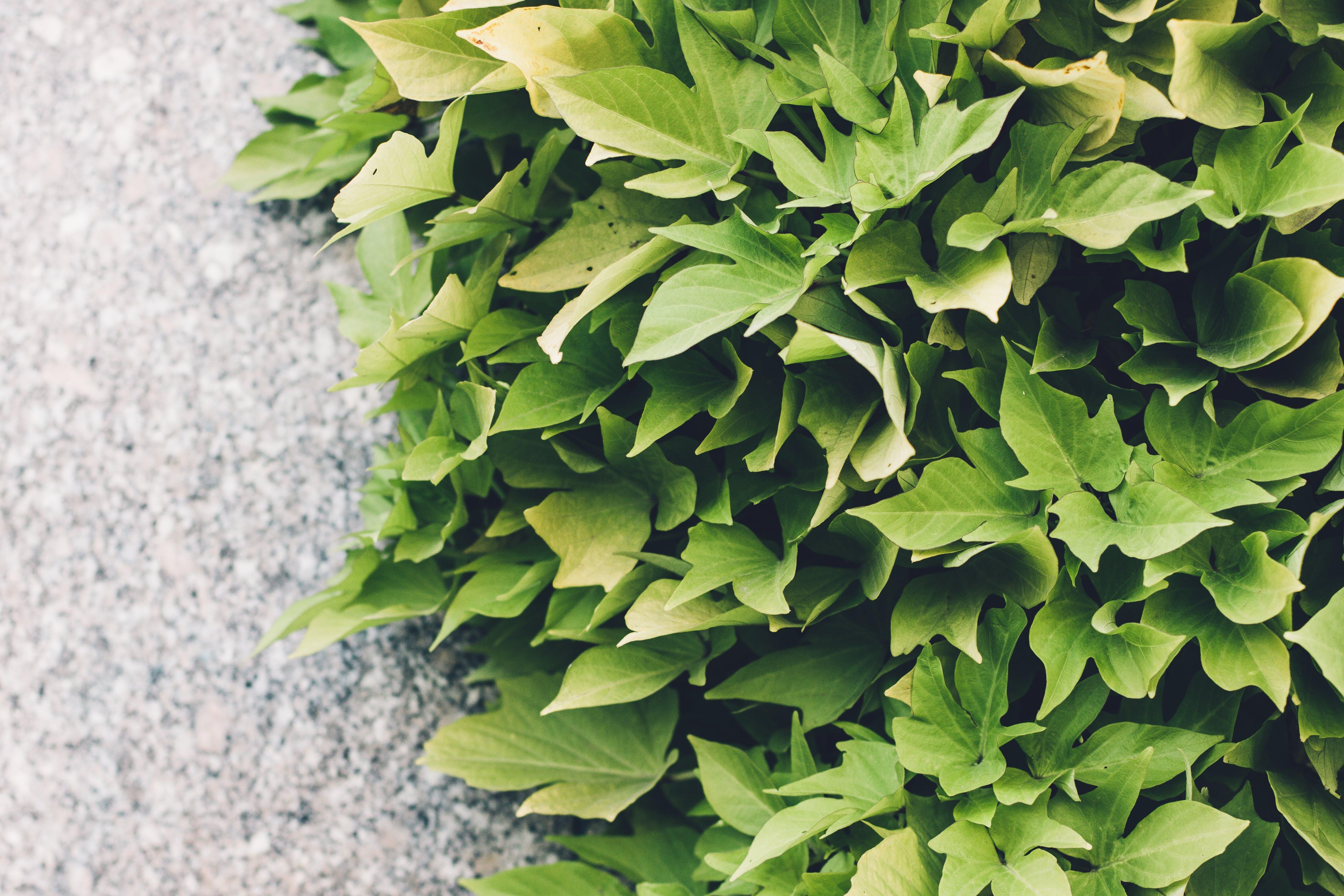 Free stock photo of green, leaves, walk