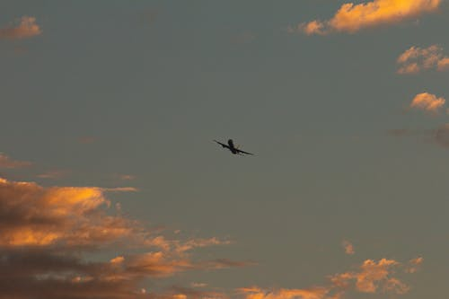 Ảnh lưu trữ miễn phí về bình minh, bóng, chim