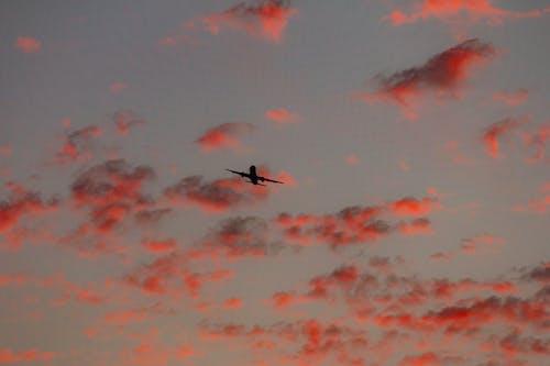 Ảnh lưu trữ miễn phí về bay, bình minh, canh
