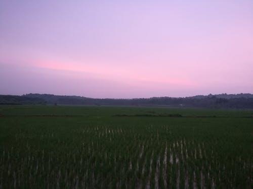 Gratis arkivbilde med gårdsdrift, kerala, naturlig, solnedgang