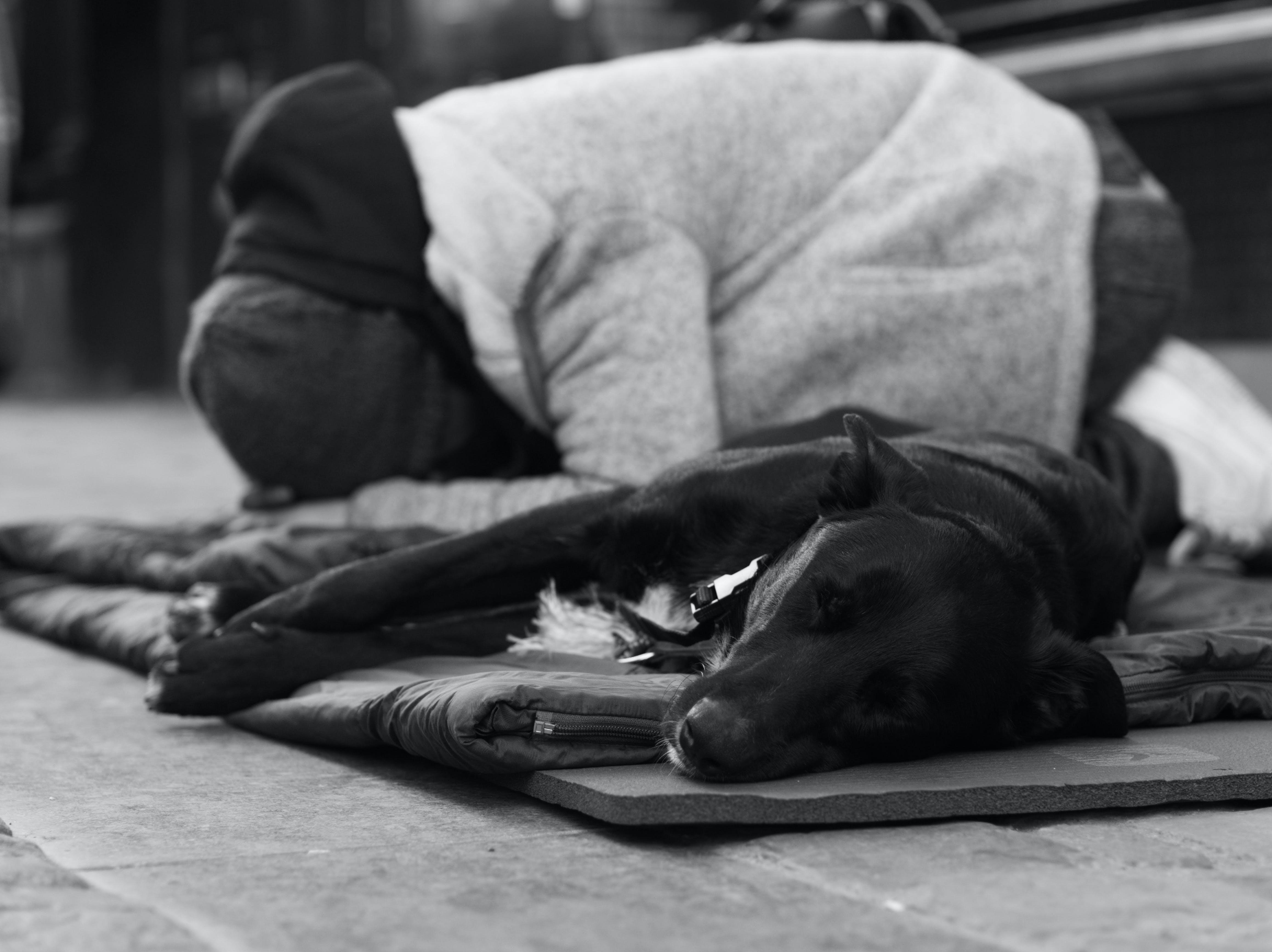 Photos gratuites de chien, émotif, femme, noir et blanc