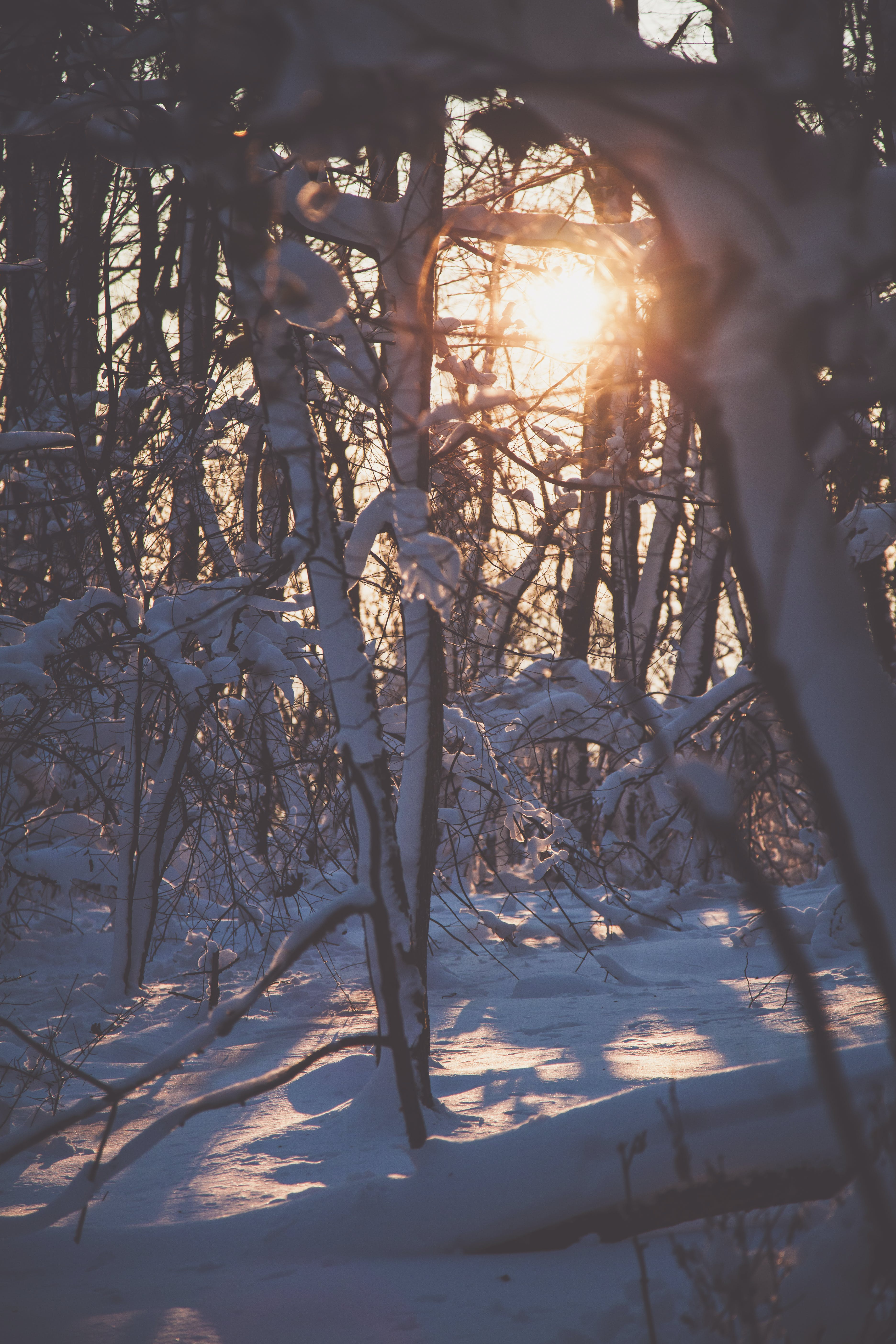Free stock photo of branches, cold, covered, freezing
