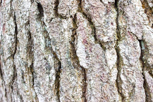 Free stock photo of abstract, background, bark