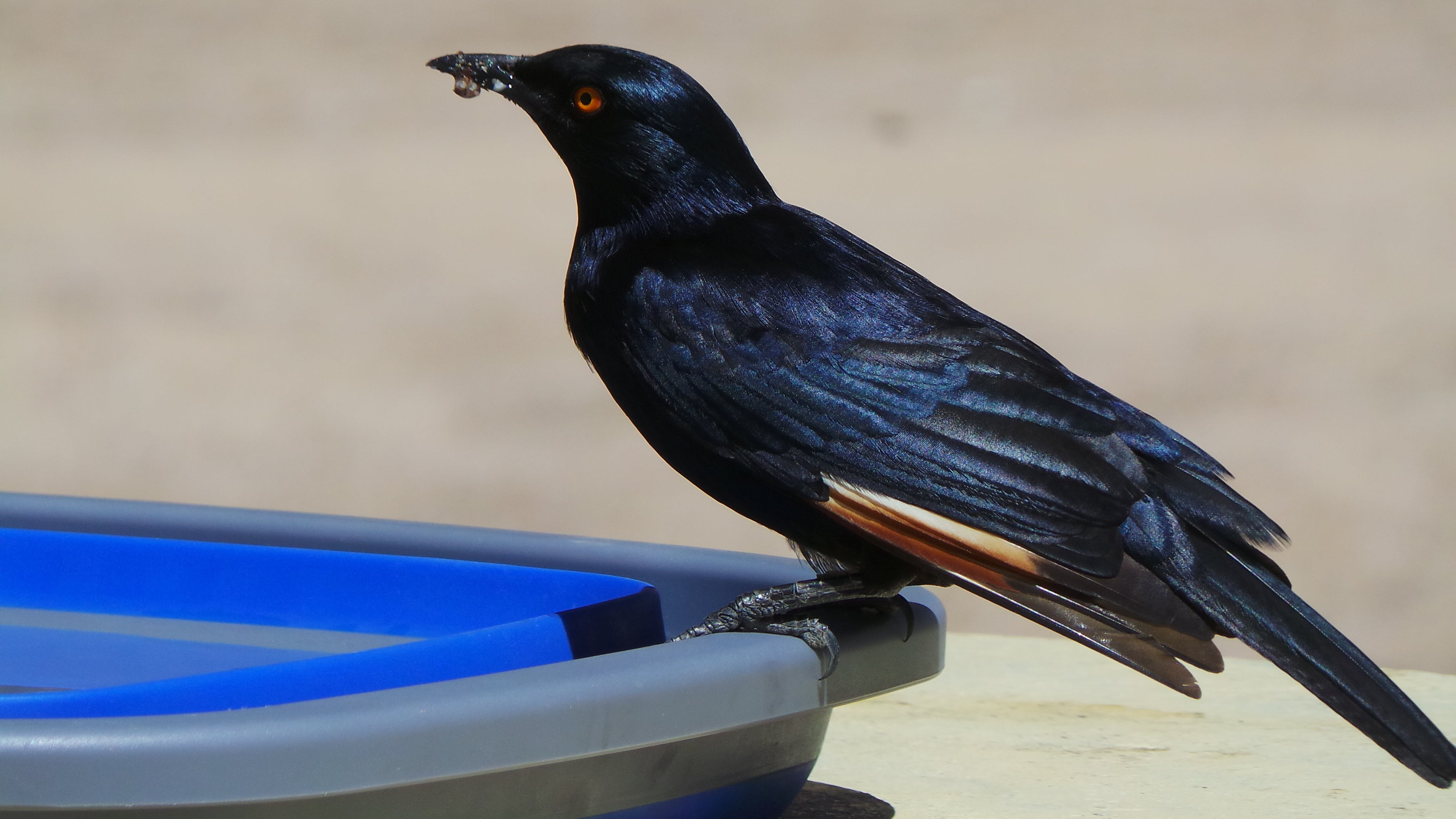 Selective Focus Photo of Black Raven on Plastic Container