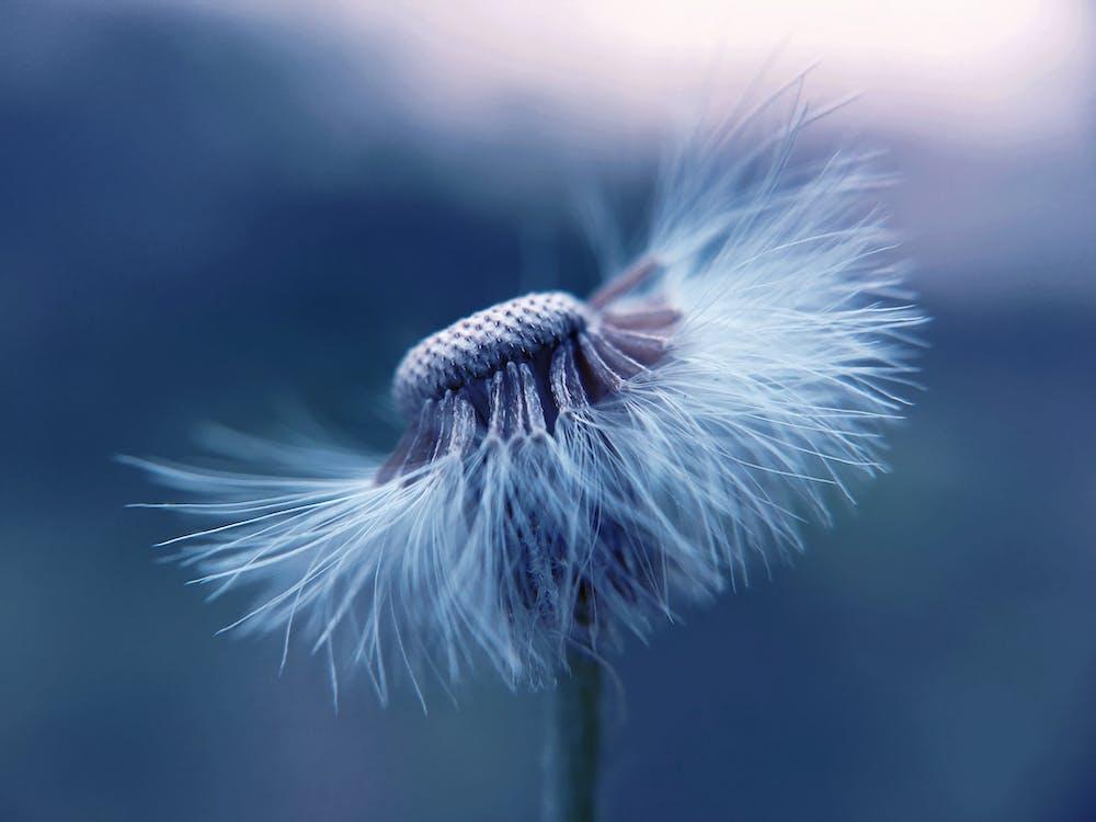 blomma, delikat, färg