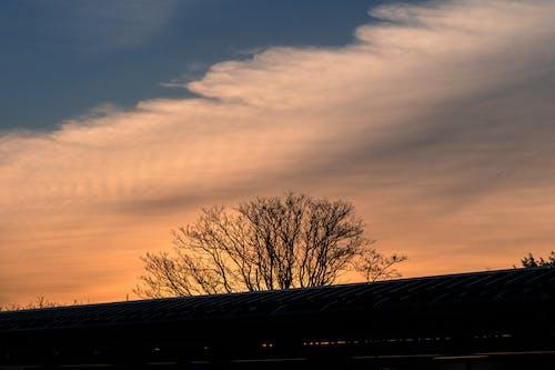 구름, 나무, 새벽, 일몰의 무료 스톡 사진