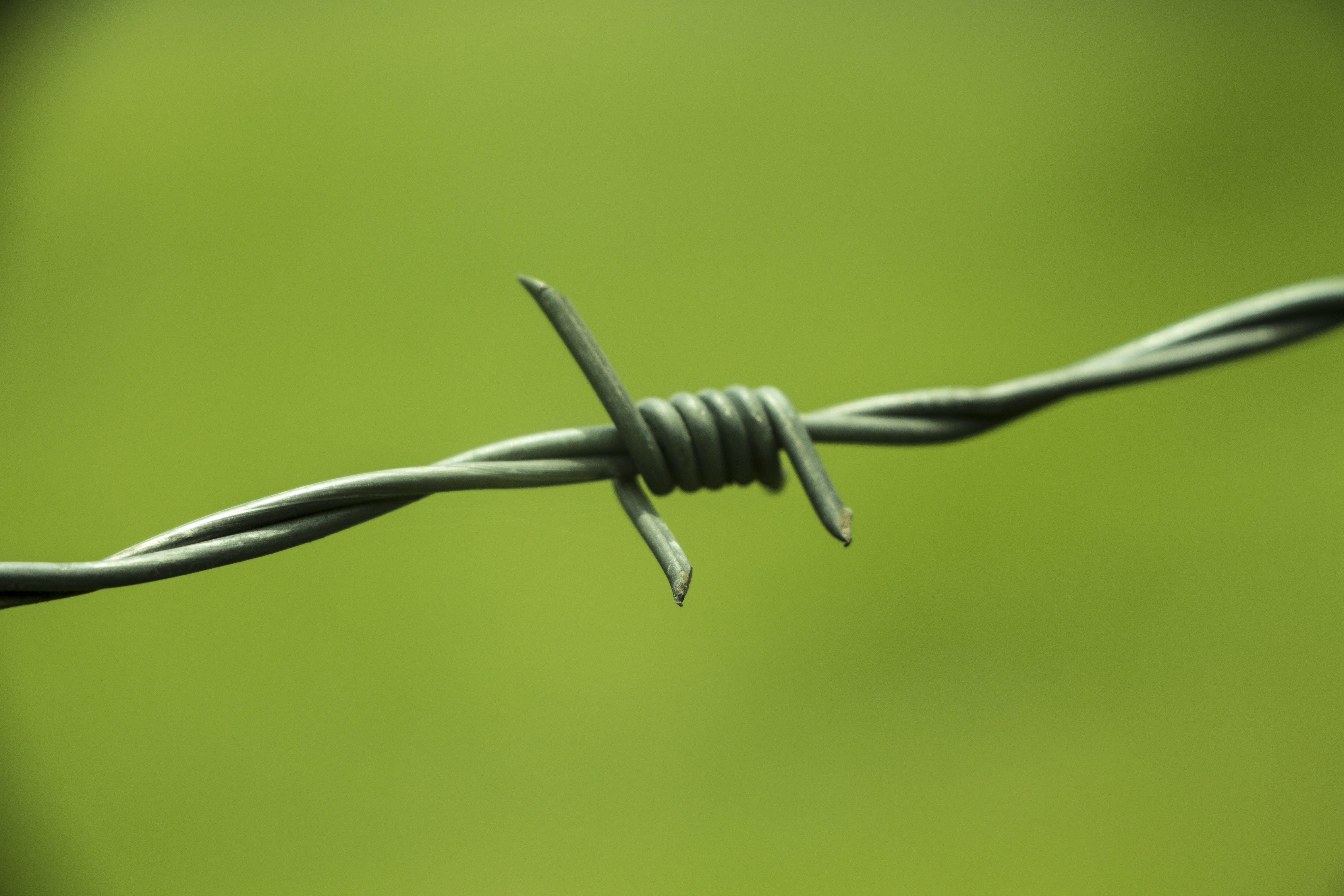 Free stock photo of farm, green, barbed wire, focus