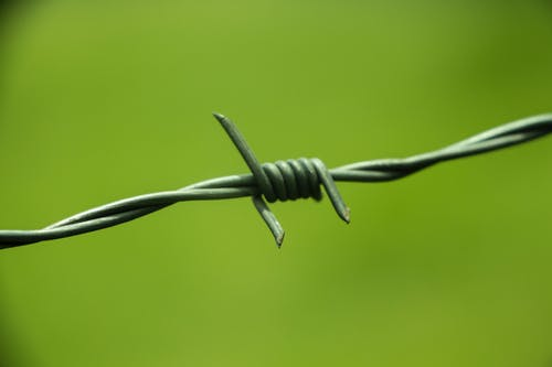 Free stock photo of barbed wire, farm, focus, green