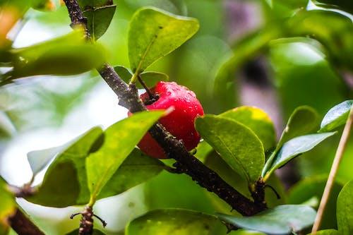 Základová fotografie zdarma na téma červená, citrusové plody, farma, kapky