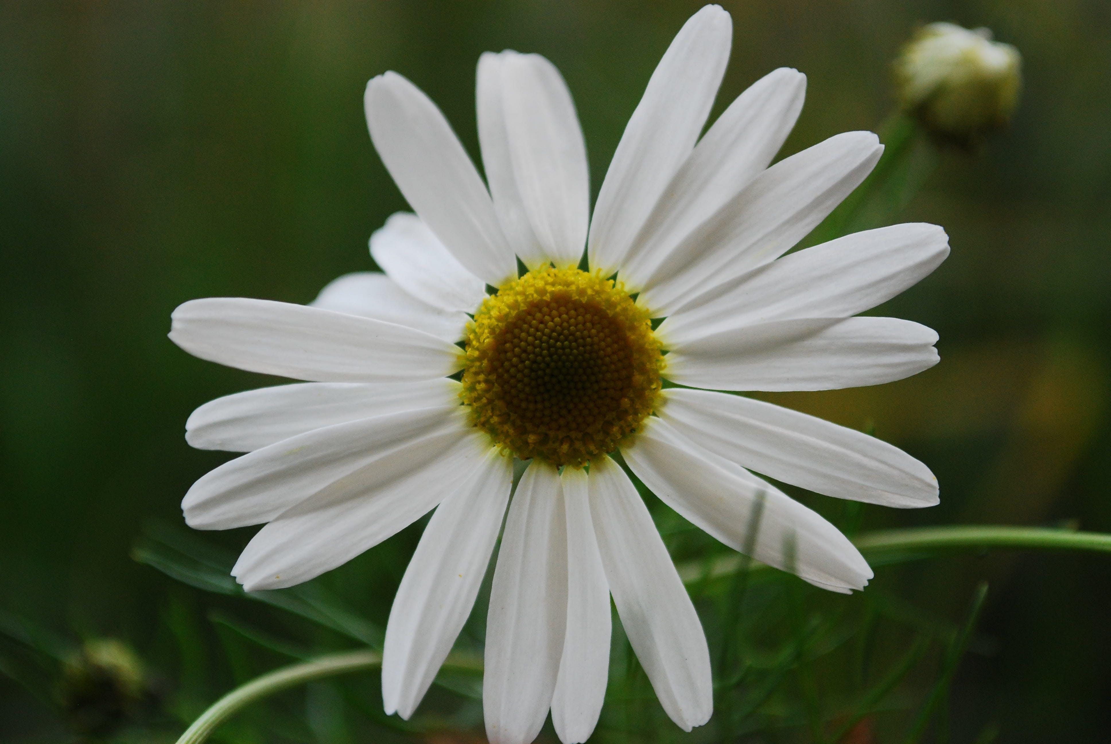 Close Up Photo White Petaled Flower